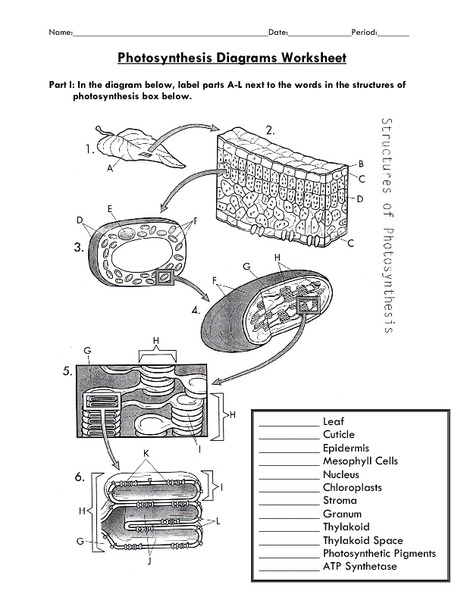 7th Grade Photosynthesis Worksheet The Best Worksheets Image