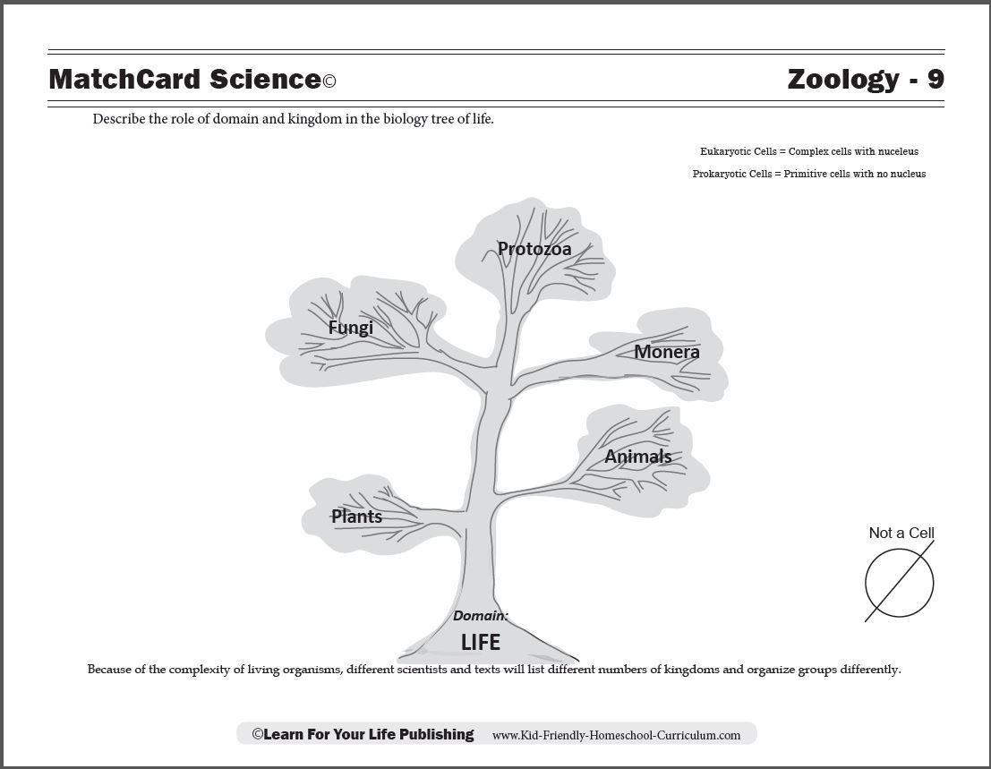 Biology Tree Of Life