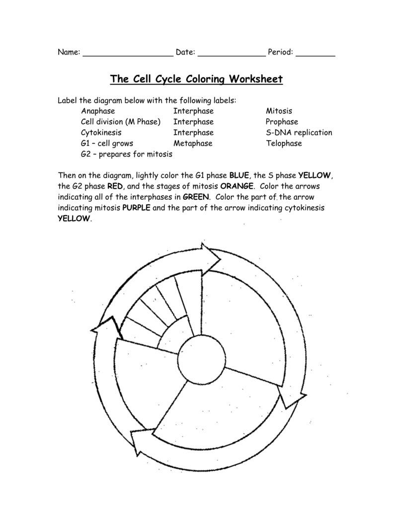 Cell Cycle Coloring Worksheet 1