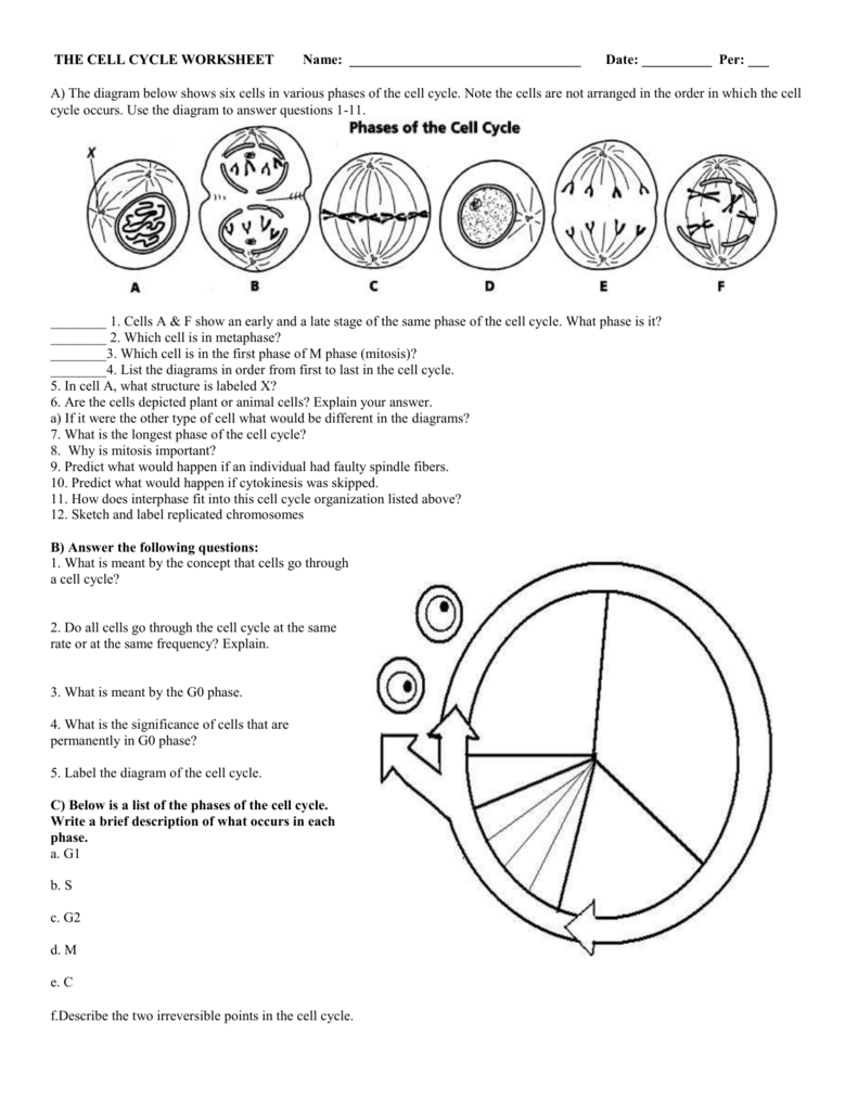 Cell Cycle Diagram Worksheet Worksheets For All
