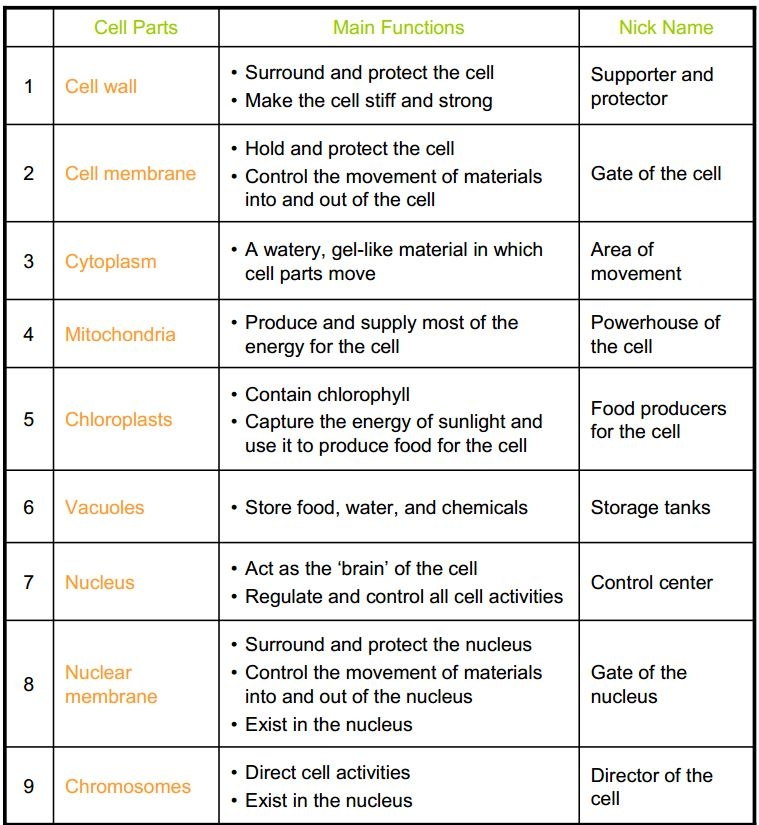 Collection Of Organelle Worksheet Answer Key