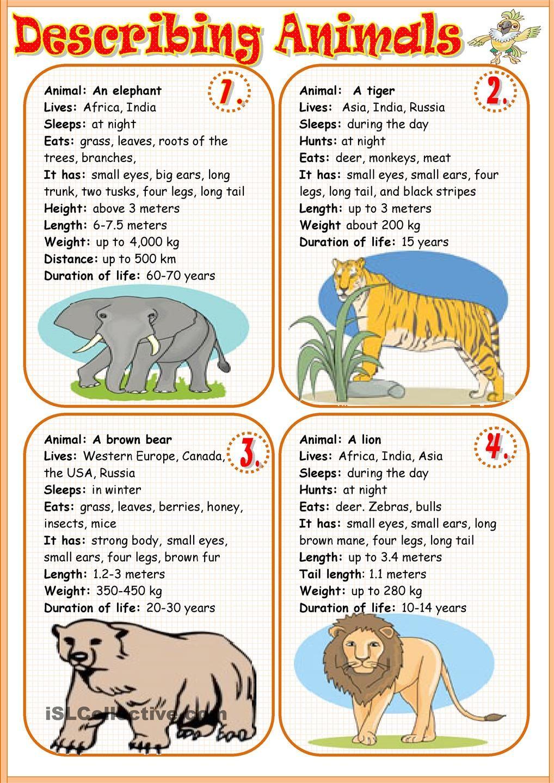 Describing Animals 1