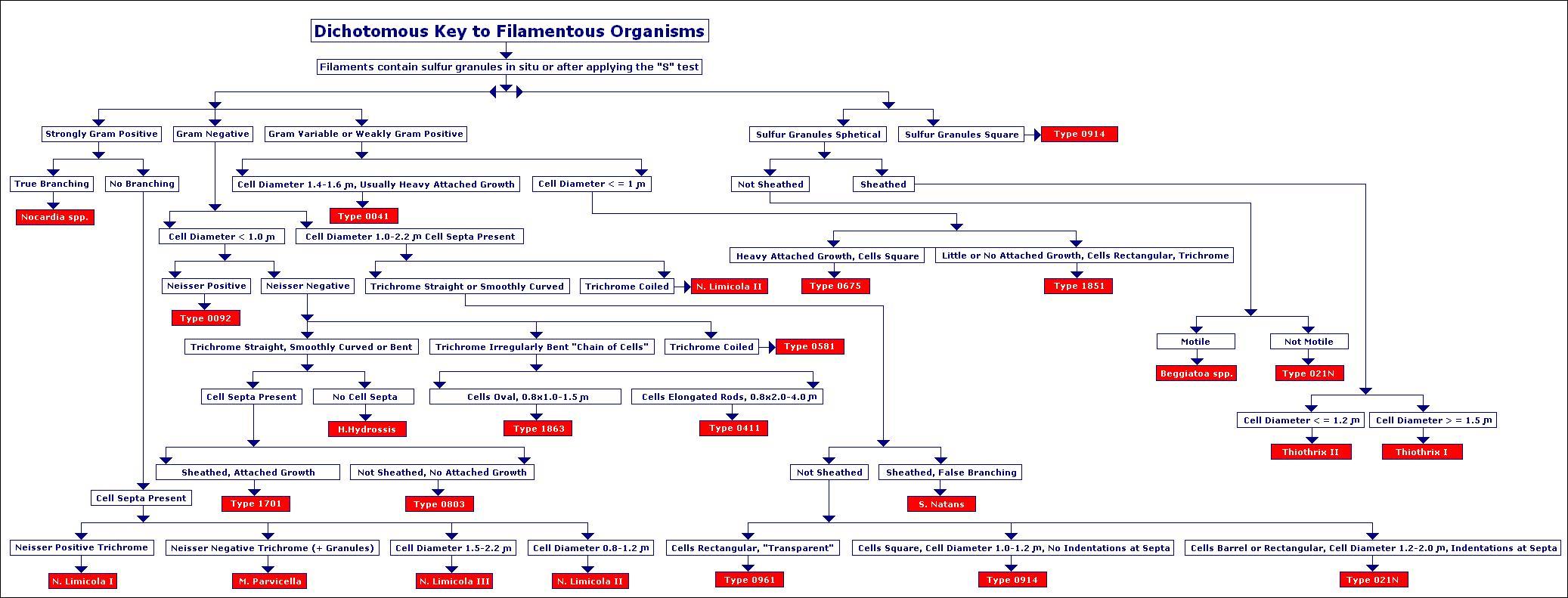Filament Identification