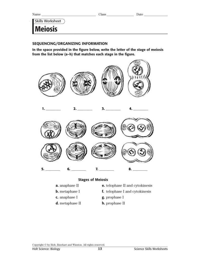 Meiosis Vocabulary Worksheets