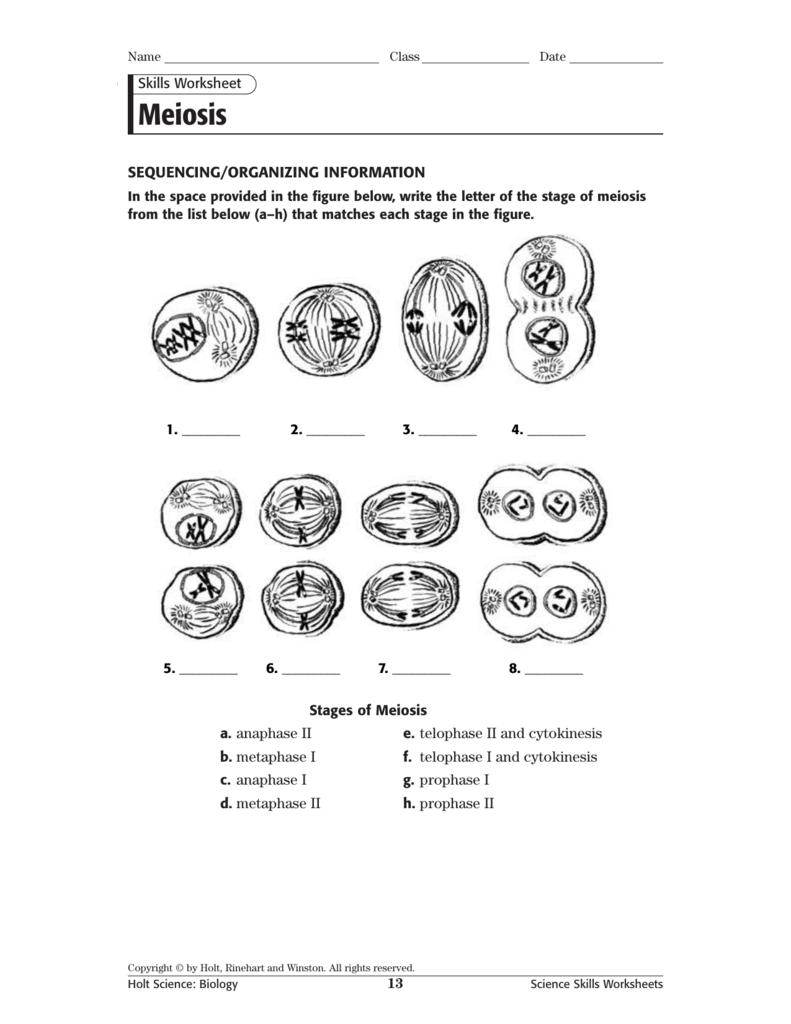 Meiosis Stages Worksheet Için Resim Sonucu