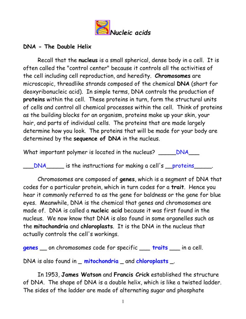 Nucleic Acids Worksheet Worksheets For All