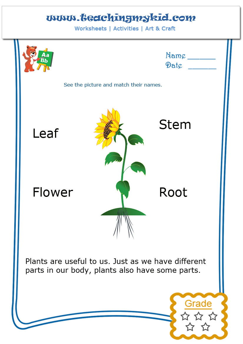 Parts Of A Plant Worksheets For Kindergarten Worksheets For All
