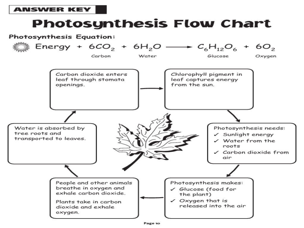 Photosynthesis diagram worksheets answers ccuart Gallery
