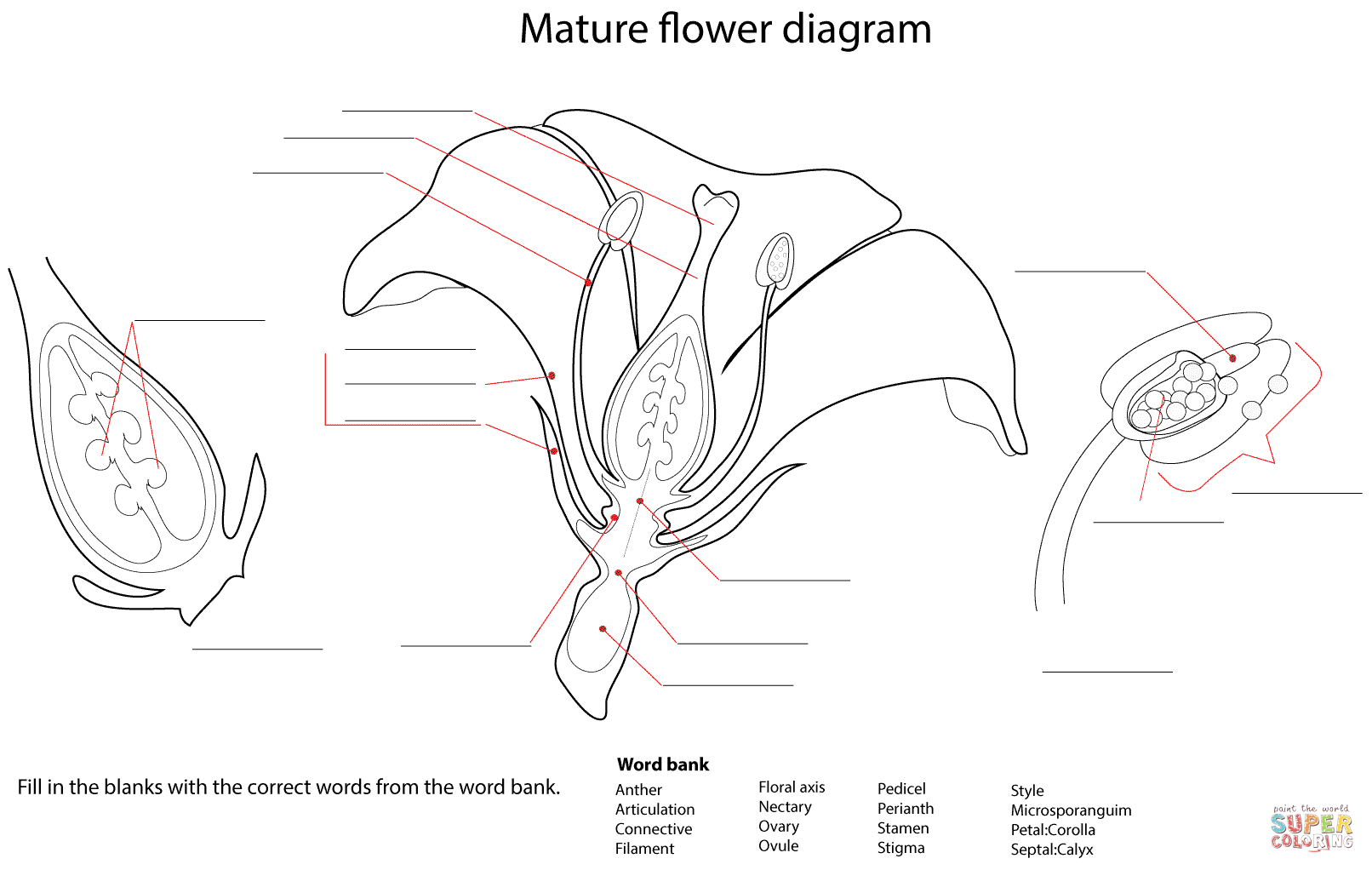 Special Parts Of A Flower Coloring Page Diagram Worksheet Free