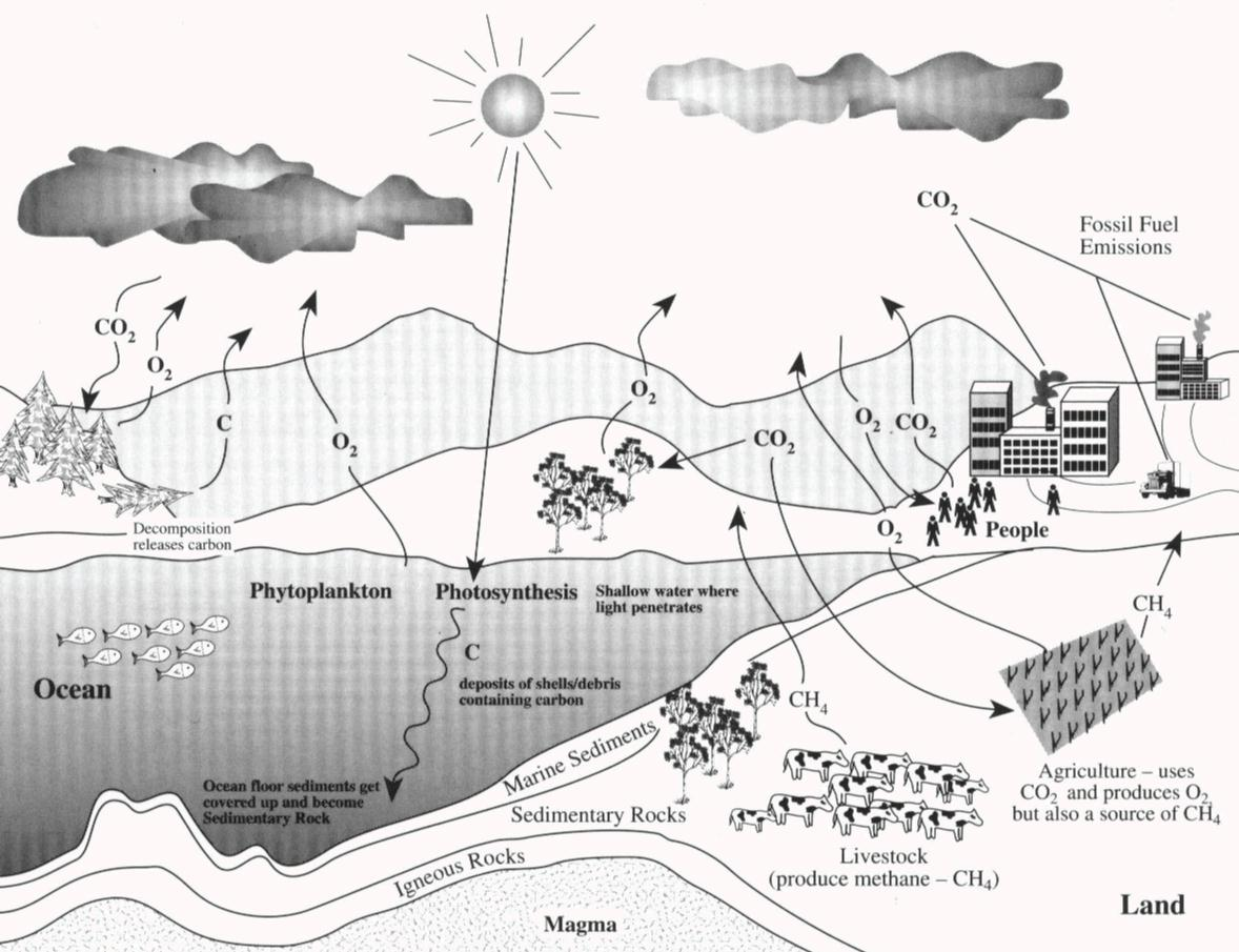 The Carbon Cycle  An Update