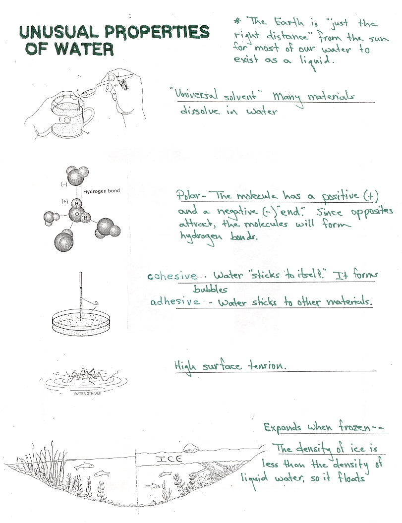 Water Properties Worksheet The Best Worksheets Image Collection