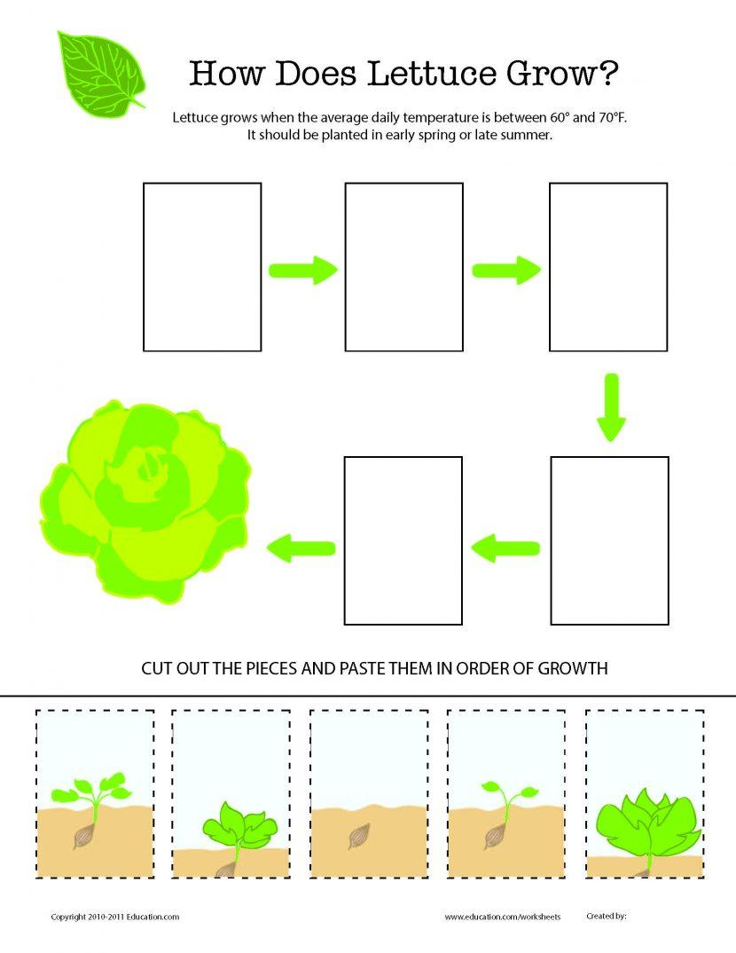 Workbooks » Properties Of Air For Kids Worksheets