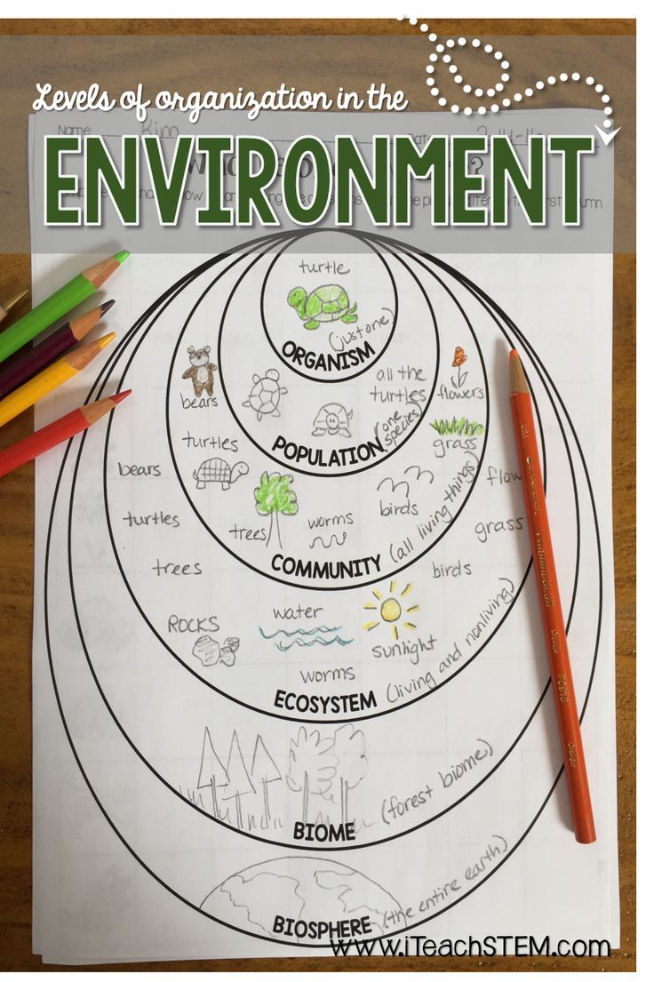411 Best Ecosystems Images On Worksheets Samples