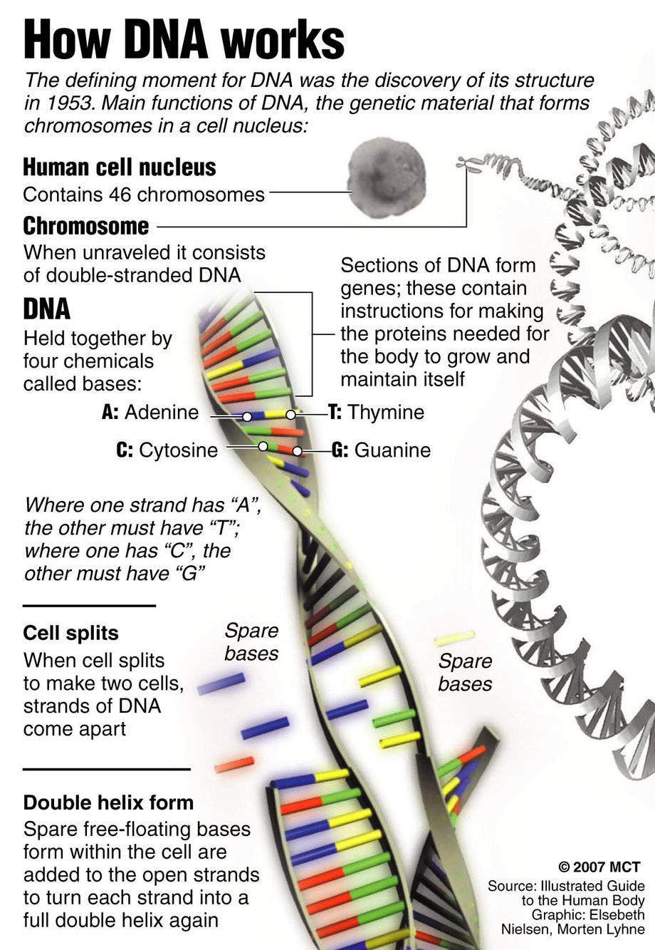 5 Dna Structure Worksheet In Cell