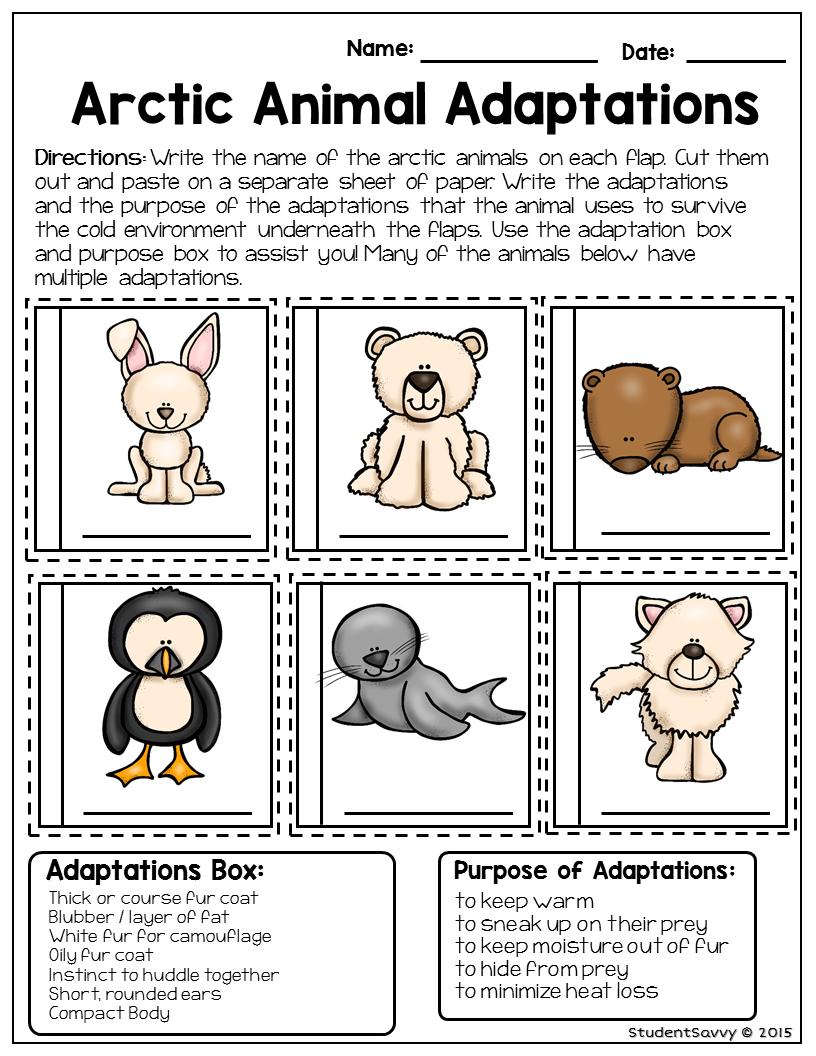 Animal Adaptations Worksheets 4th Grade Worksheets For All