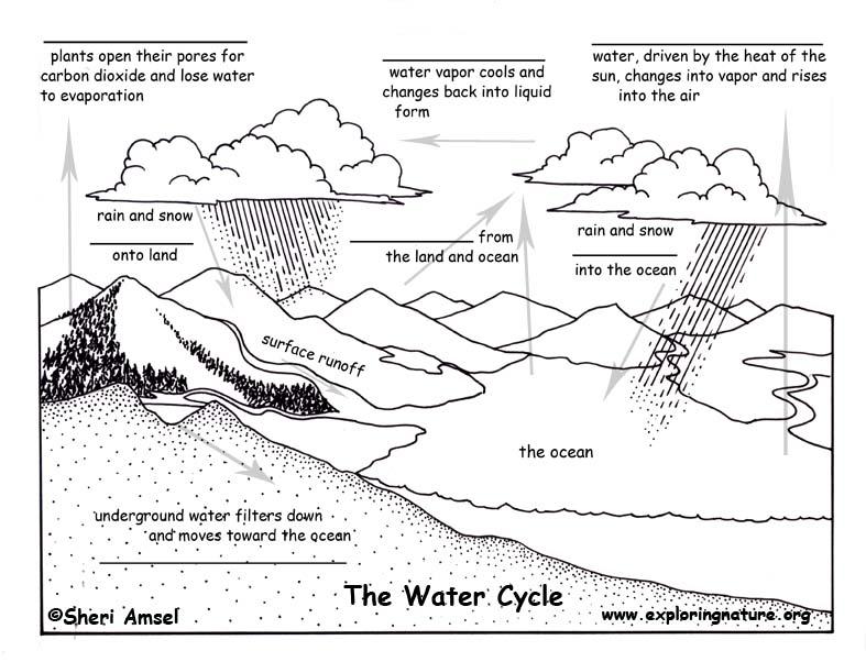 Biogeochemical Cycles Lessons Tes Teach Worksheet