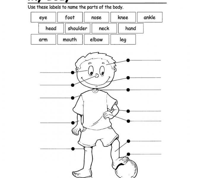 Body Worksheets