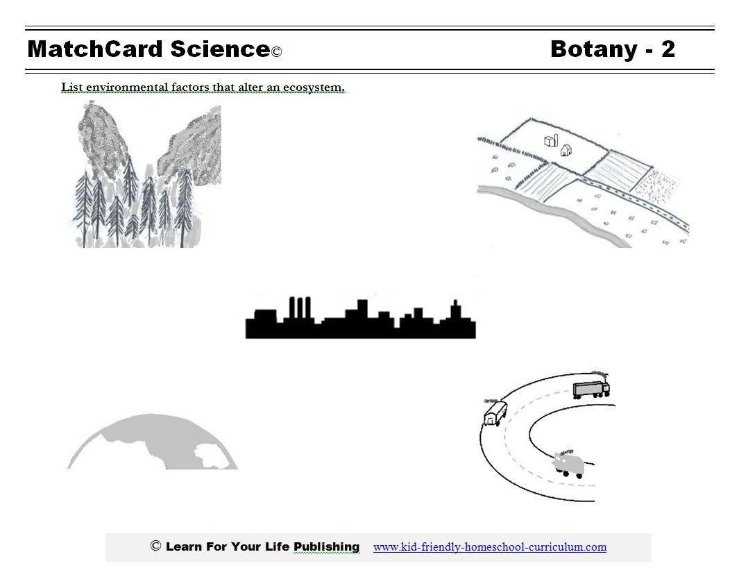 Ecology Lesson Plan