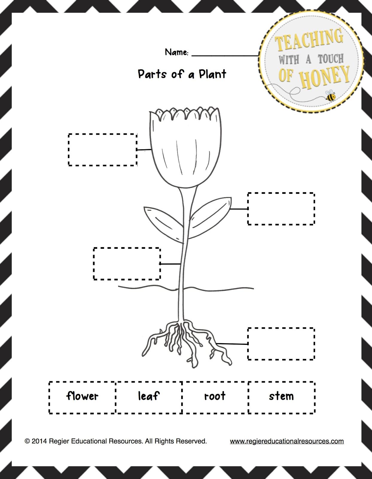 Flowersheet Mathsheets For Kindergarten Preschoolers Coloring