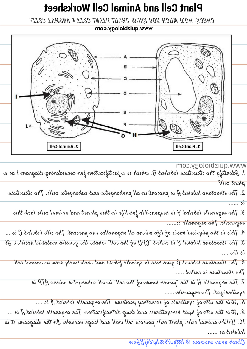 Formidable Biology Labeling Worksheets In Animal Cell Labeled