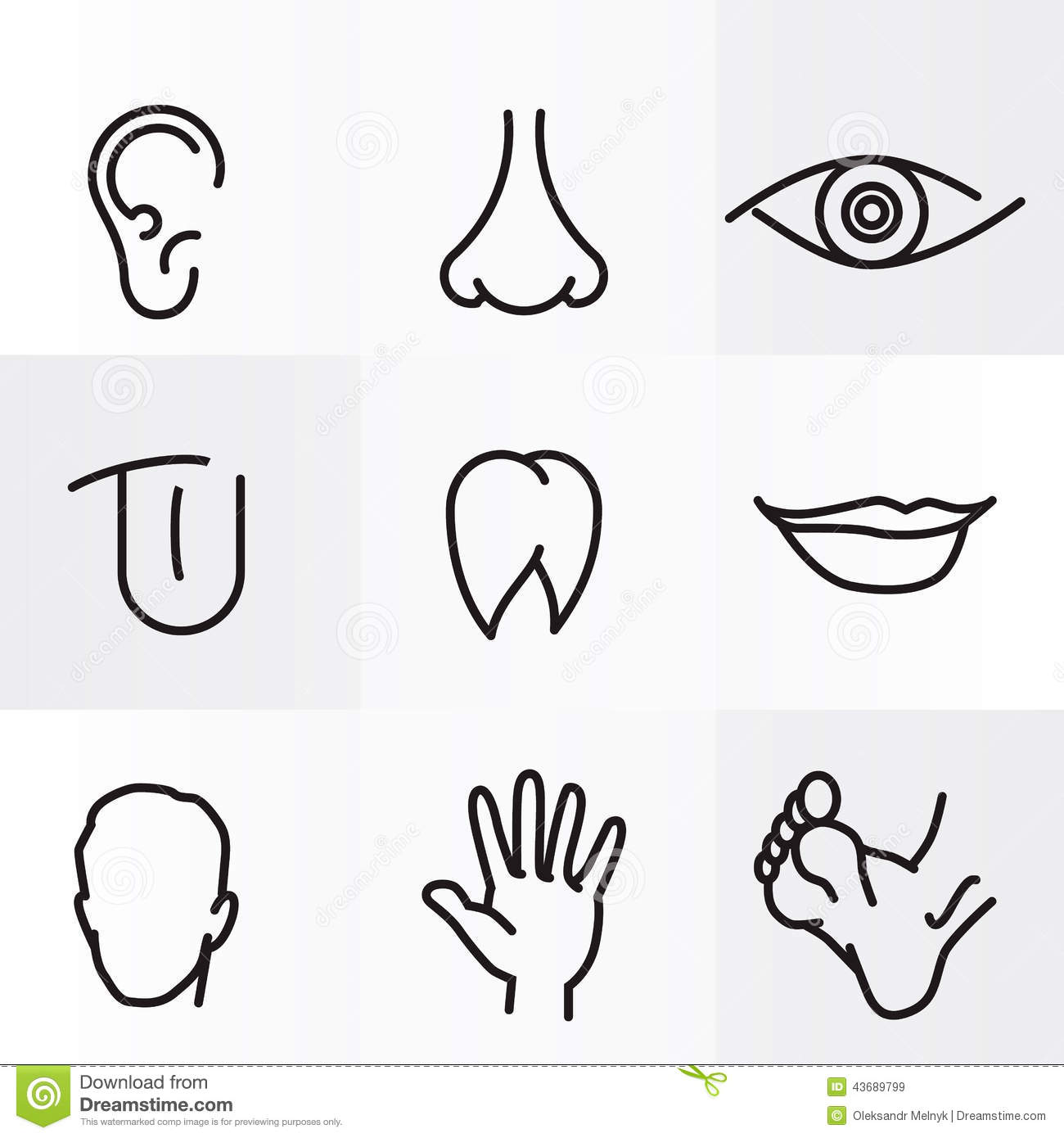 Human Body Parts Stock Illustration  Illustration Of Lifestyle