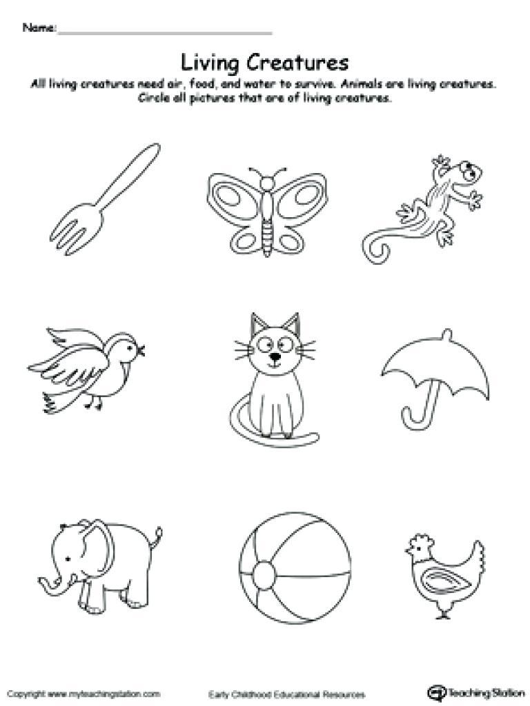 Kindergarten Kindergarten Worksheet  Preschool Science Worksheets