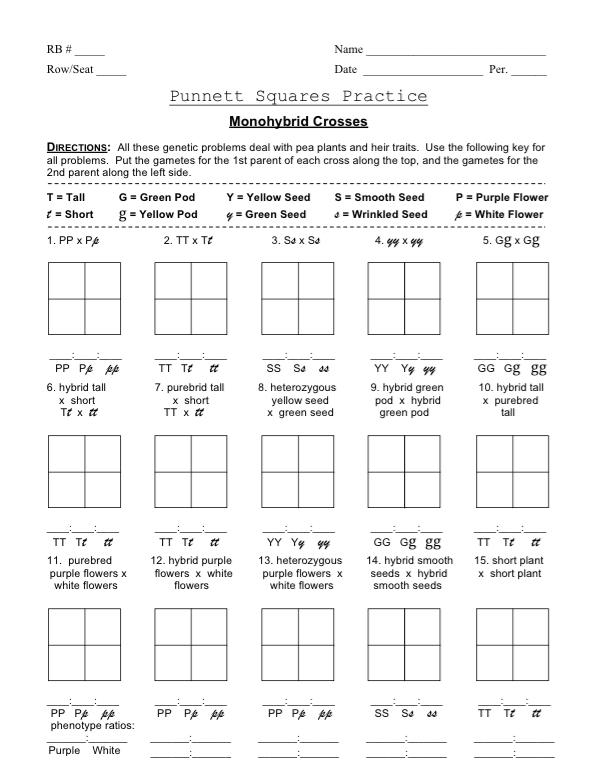 Monohybrid Cross Worksheet Image Collections - Worksheets ...