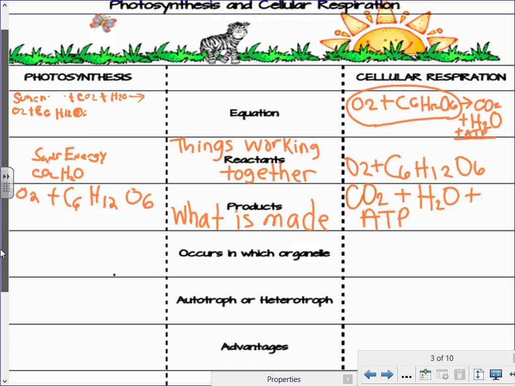Photosynthesis Respiration Worksheet Worksheets For All