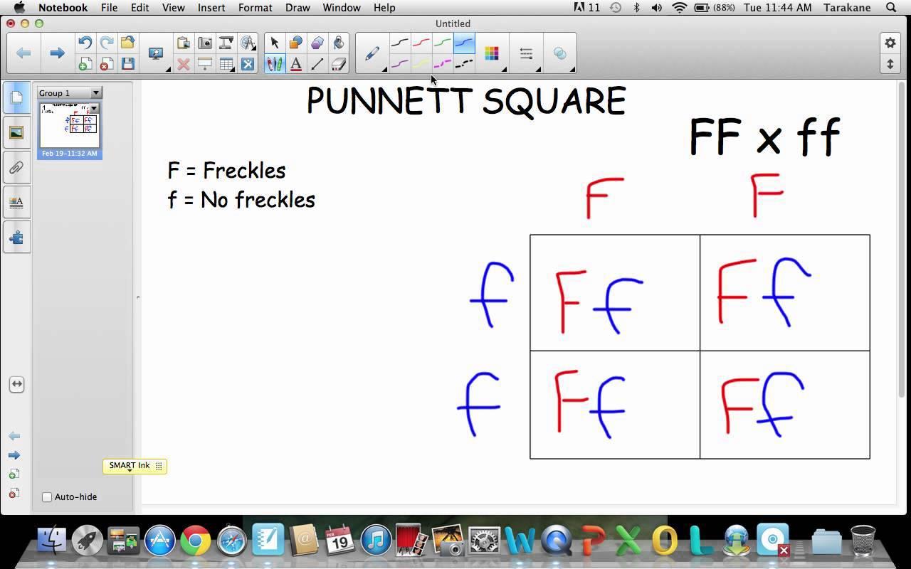 Punnett Square Tutorial
