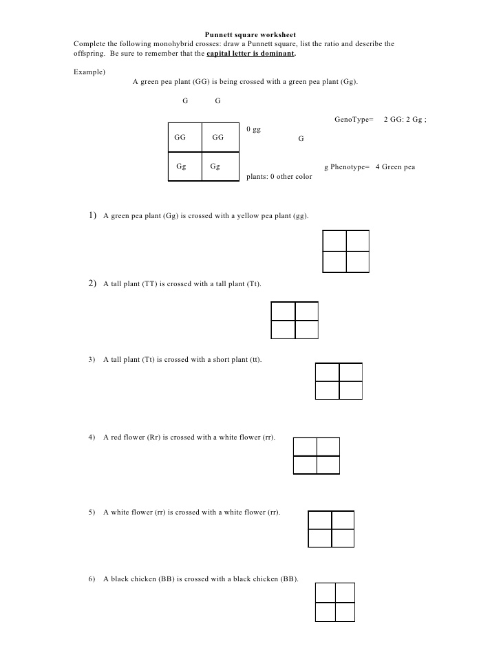 Punnett Square Worksheet With Answers The Best Worksheets Image