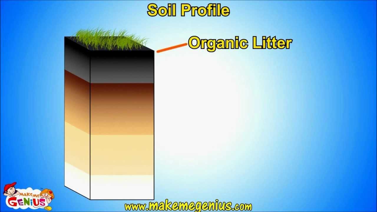 Soil Types & Soil Horizons (profile ) Unit For Kids