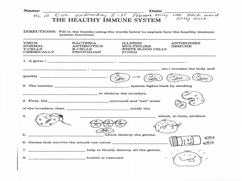 The Healthy Immune System Worksheet