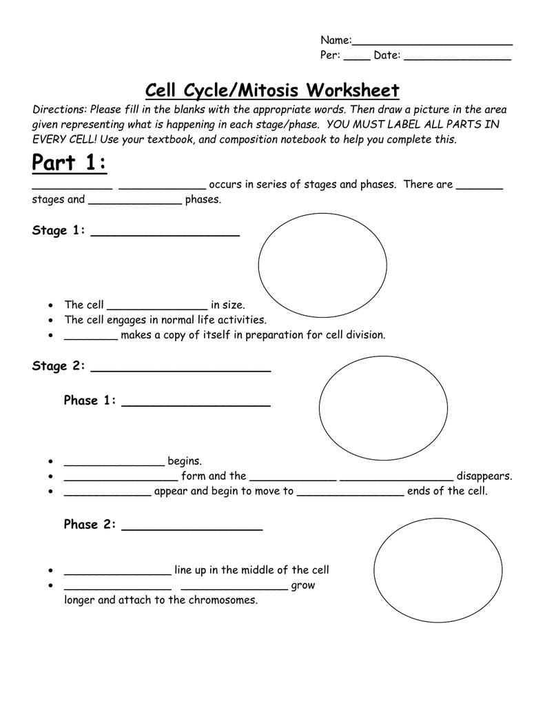 Worksheet  Cell Cycle Mitosis Worksheet  Grass Fedjp Worksheet