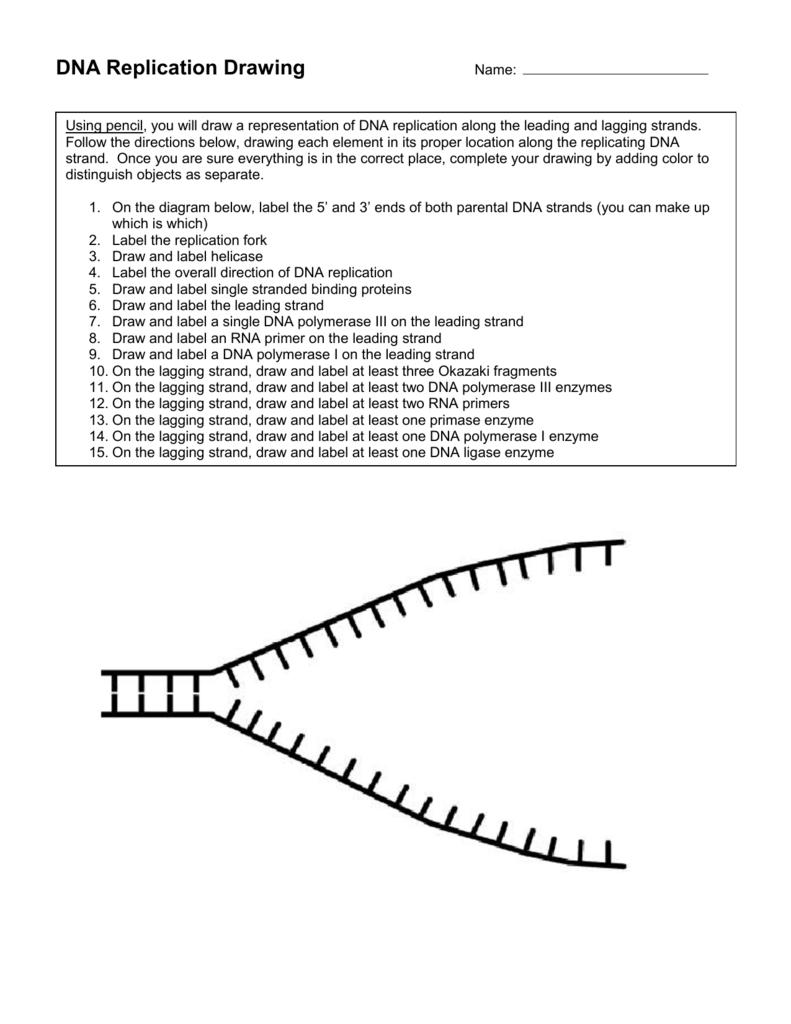 Worksheet  Dna And Replication Worksheet  Lindacoppens Worksheet