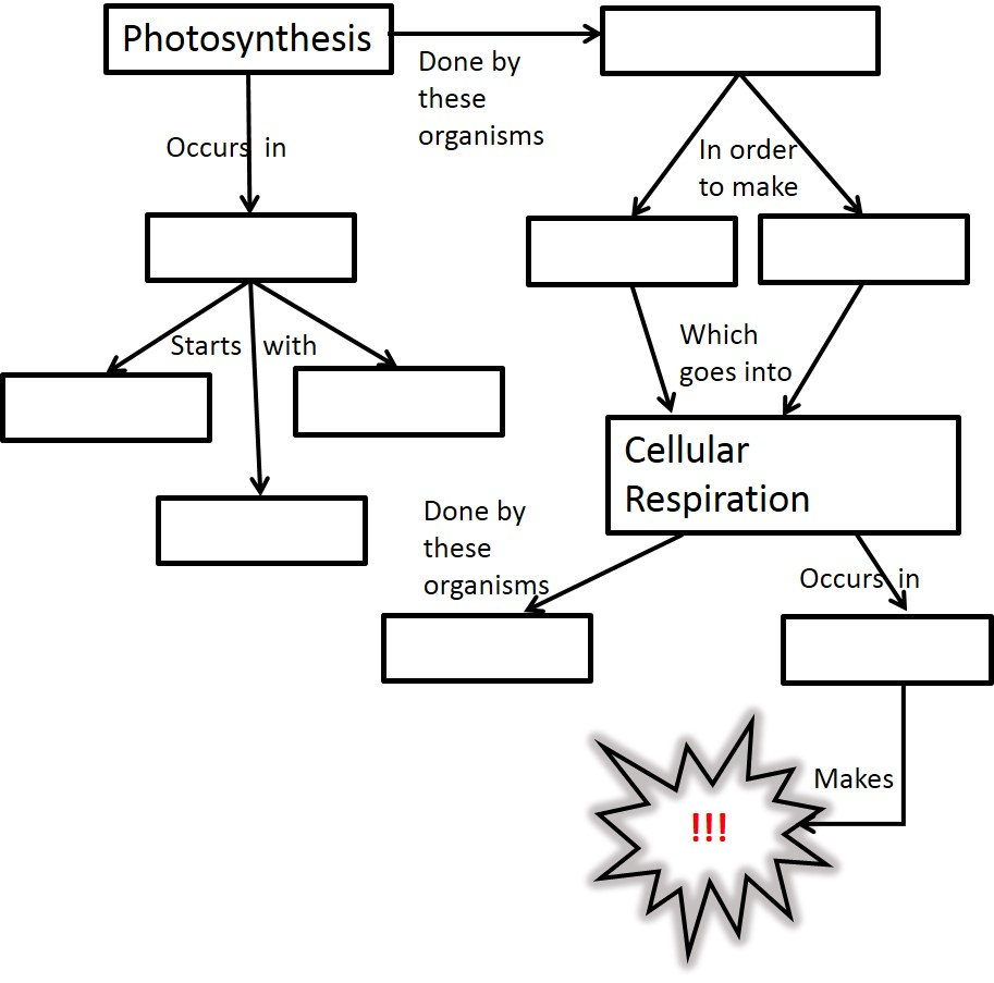 Amusing Cellular Respiration Worksheets Middle School For Your Bio