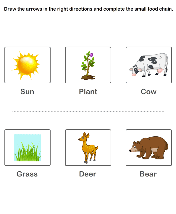 Animal Food Chain Worksheets The Best Worksheets Image Collection