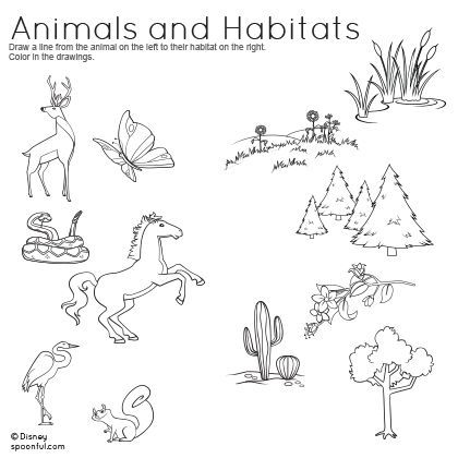 Animal Habitat Worksheets For Kindergarten 128951