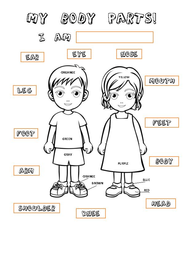 Body Parts Worksheet For Preschool