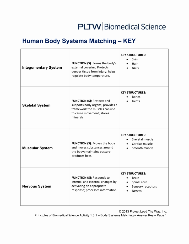 Body Systems Matching Worksheet Answers