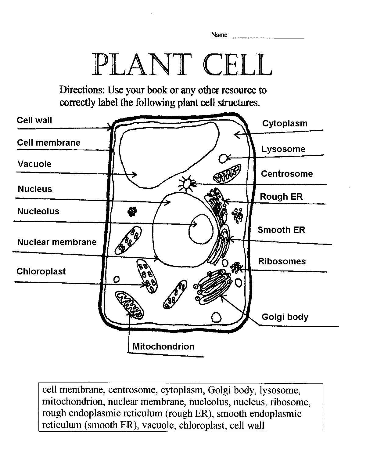 Comparing Plant And Animal Cells Venn Diagram Worksheet Answers