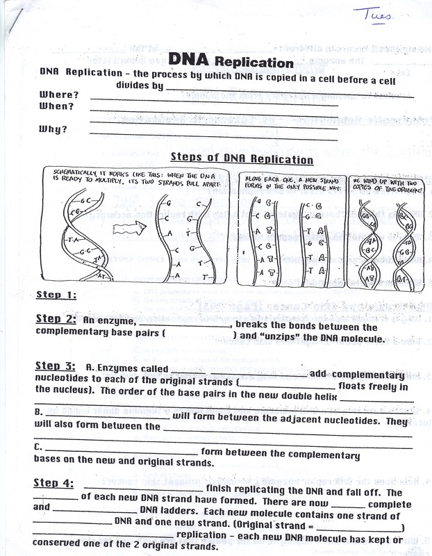 Dna Sequencing Worksheet The Best Worksheets Image Collection