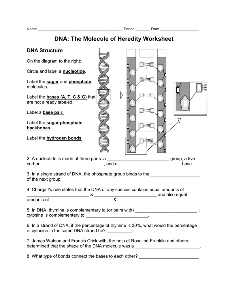 Dna The Molecule Of Heredity Worksheet Key The Best Worksheets