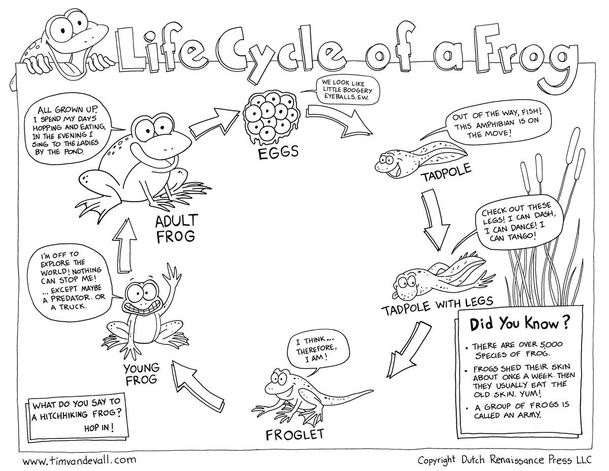 Free Life Cycle Of A Frog Printable