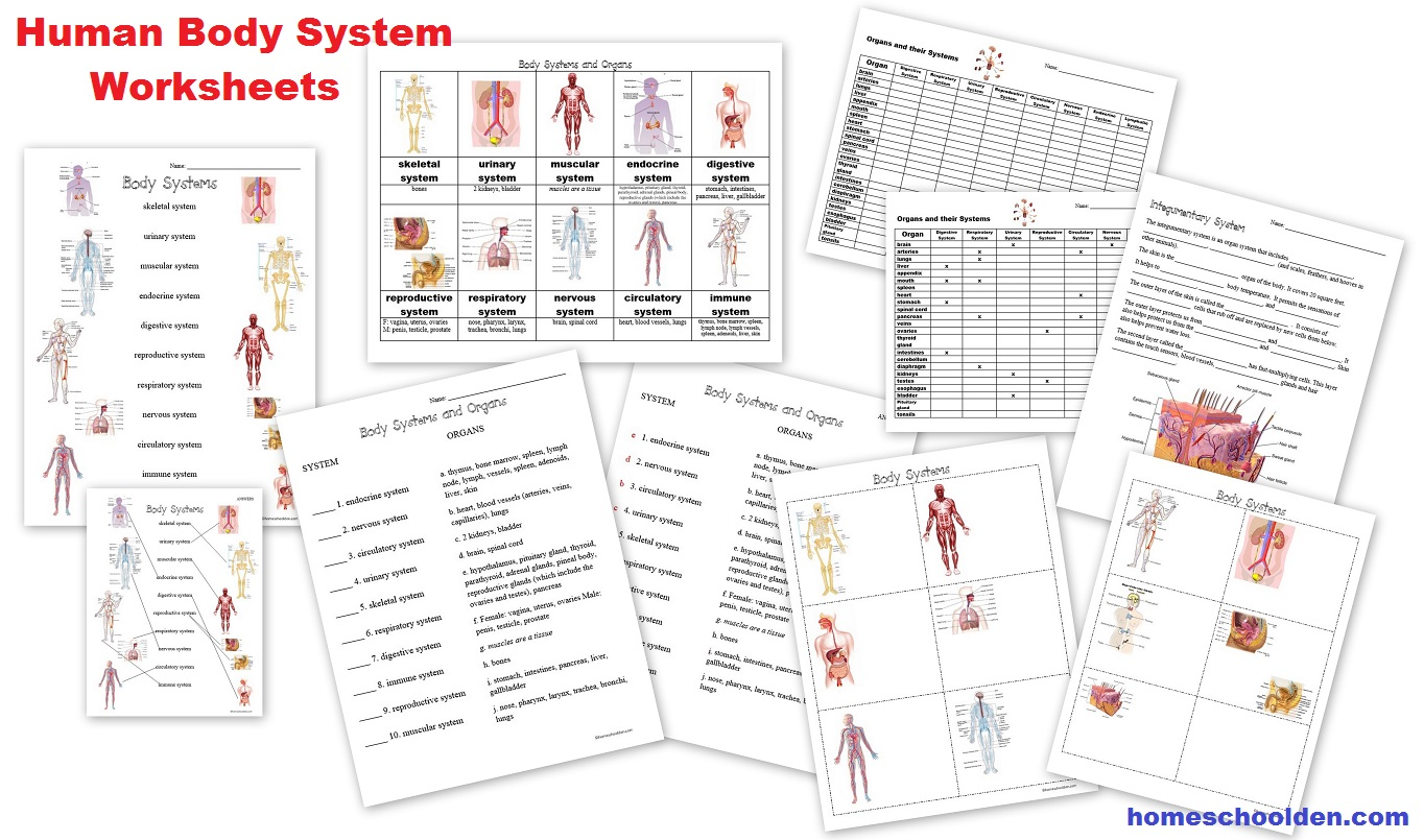 Human Body Worksheets  Cells, Tissues, Organs, And The Human Body