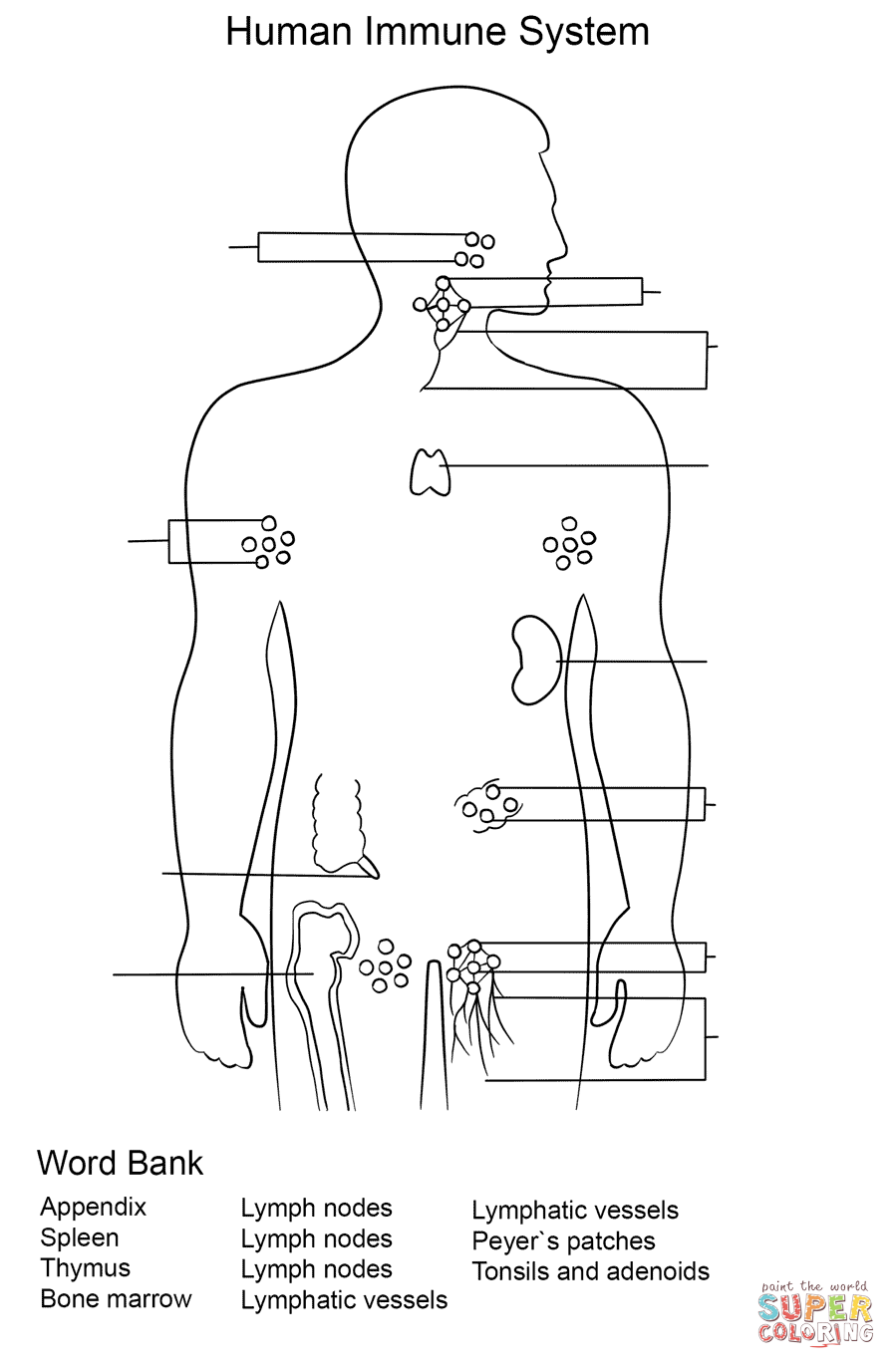 Immune System Worksheet Coloring Page