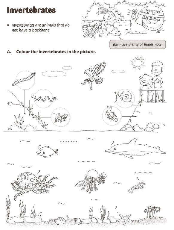 Invertebrates Worksheets