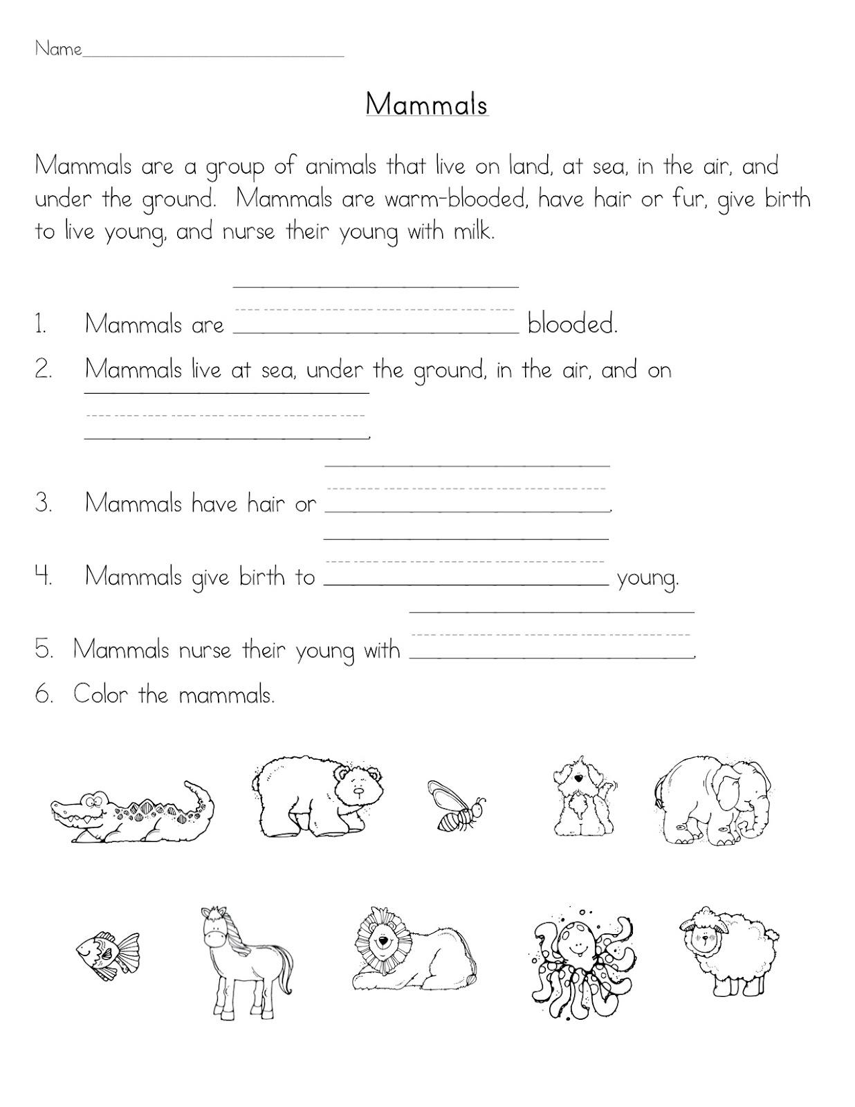 Kids  Science Worksheets First Grade  Worksheets For St Grade Math