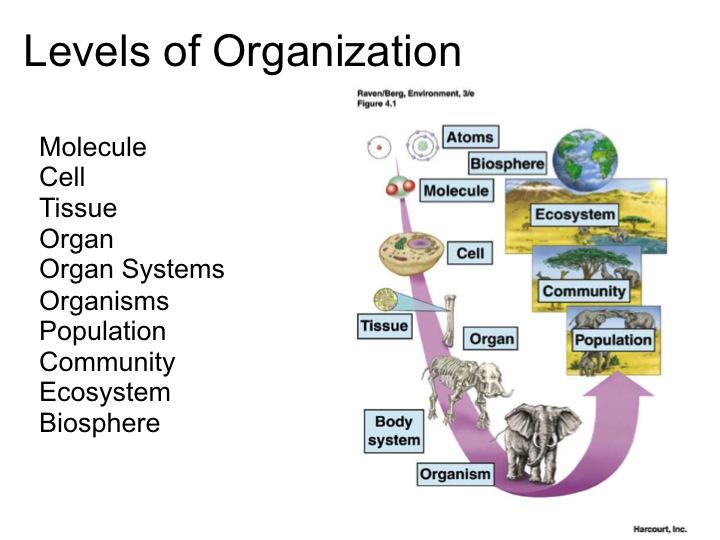 Levels Of Organization Biology Worksheet