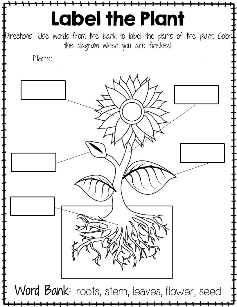 Parts Of The Plant Worksheets Grade 1