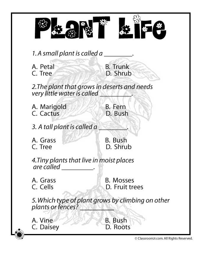 Plant Worksheet The Best Worksheets Image Collection